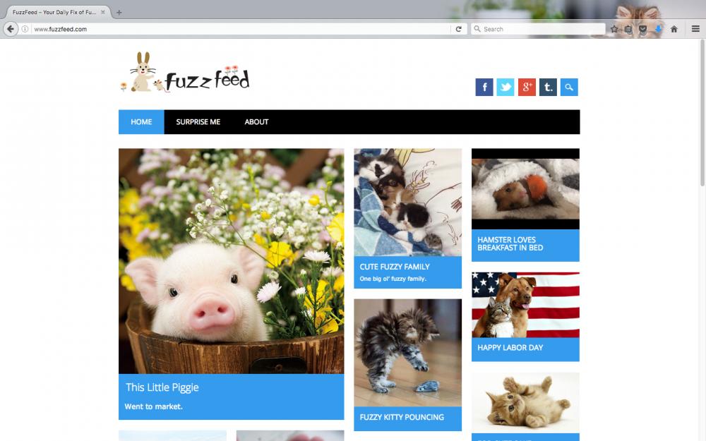 FuzzFeed